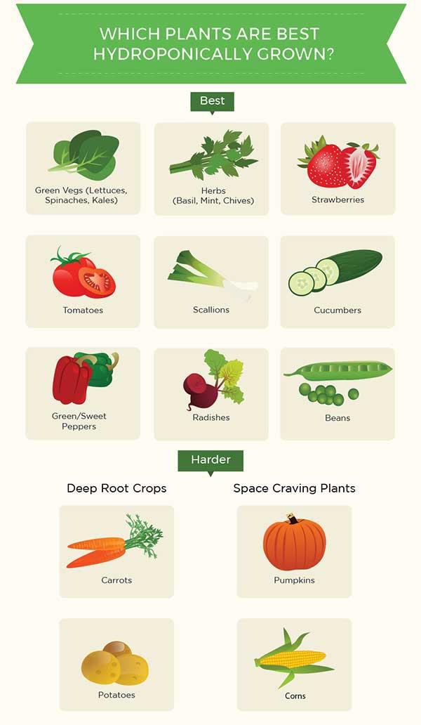 Hydroponic Plants List